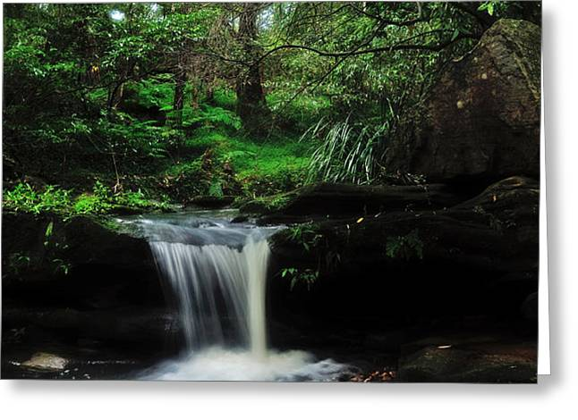 Hidden Rainforest Greeting Card by Kaye Menner