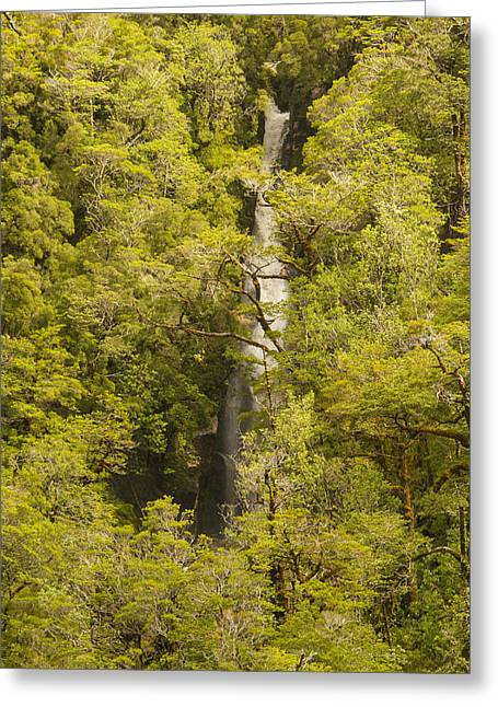 Green Chile Greeting Cards - Hidden Waterfalls Greeting Card by Tim Grams
