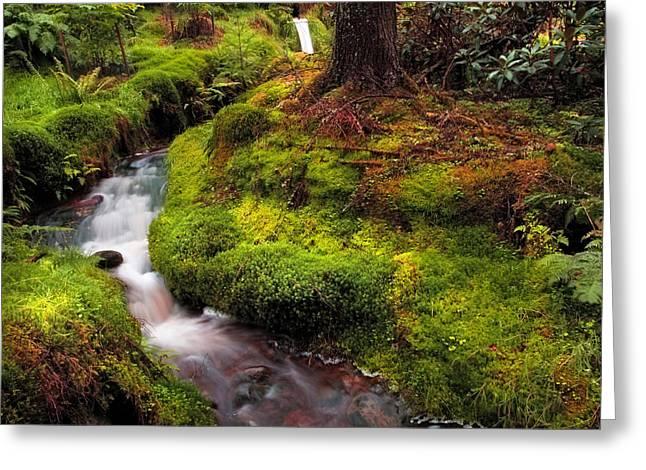 Hidden Woodland Corner. Benmore Botanical Garden. Scotland Greeting Card by Jenny Rainbow