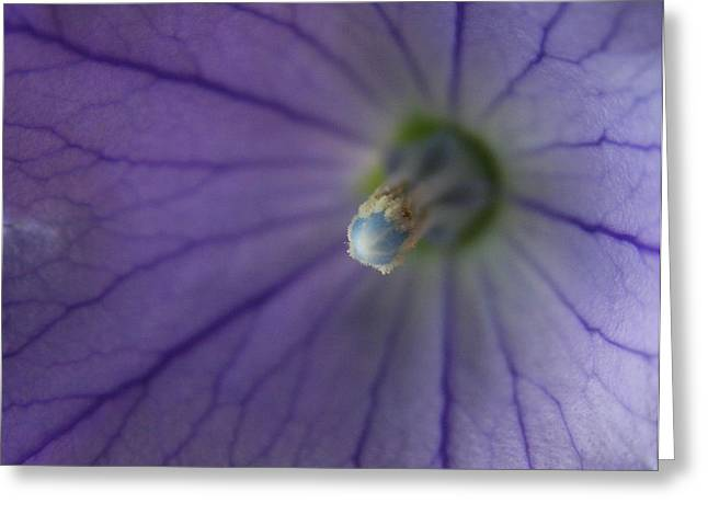 Flower Photos Greeting Cards - Hidden World  Greeting Card by Neal  Eslinger