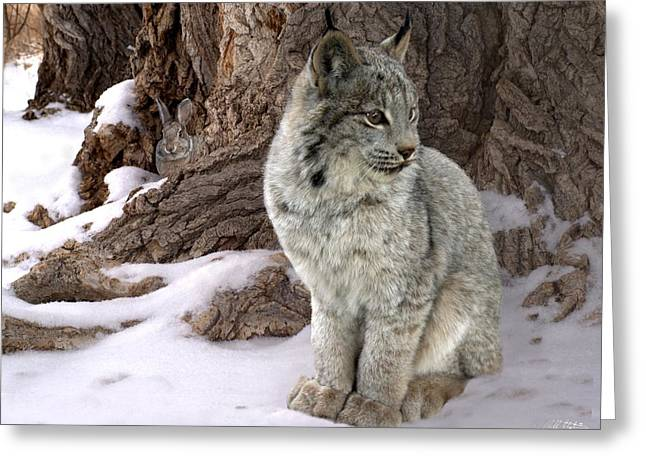 Bobcat Greeting Cards - Hide and Seek Greeting Card by Bill Stephens