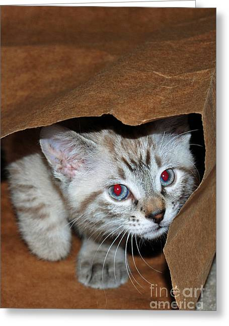 Brown Paper Bag Greeting Cards - Hide and Seek Kitten 1 Greeting Card by Eva Kaufman