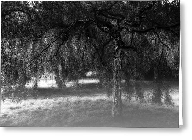 Fine Art White Nature Trees Greeting Cards - Hide and Seek Greeting Card by Wim Lanclus