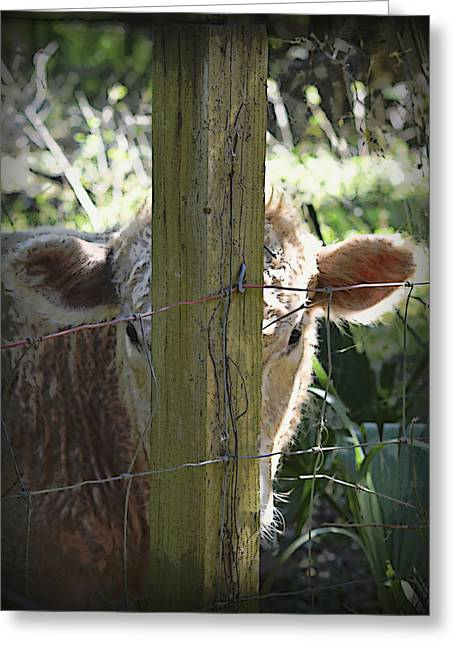 Acrylic Art Greeting Cards - Hide N Seek Bull Greeting Card by Sheri McLeroy