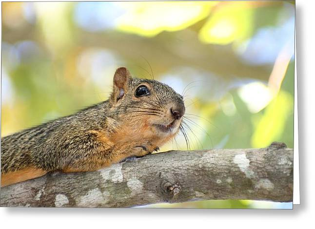 Fox Squirrel Greeting Cards - Hiding From The Hawk Greeting Card by Ester  Rogers