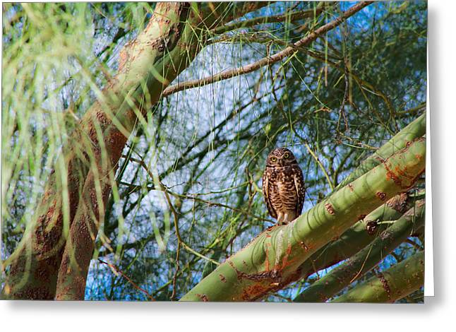 Wildlife Genre Greeting Cards - Hiding in a Tree Greeting Card by Ed  Cheremet