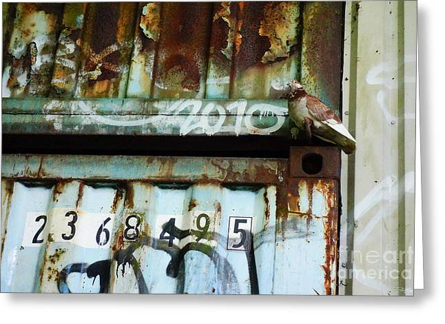 Secretive Birds Greeting Cards - Hiding In Plain Sight Greeting Card by Pete Edmunds
