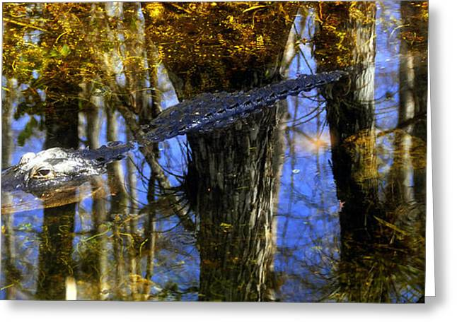 Hiding Greeting Cards - Hiding in reflection Greeting Card by David Lee Thompson
