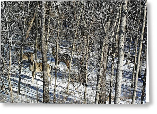Forest Dweller Greeting Cards - Hiding In The Forest Greeting Card by Debbie Oppermann