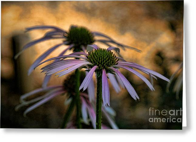 Best Sellers -  - Pinks And Purple Petals Photographs Greeting Cards - Hiding In The Shadows Greeting Card by Peggy J Hughes