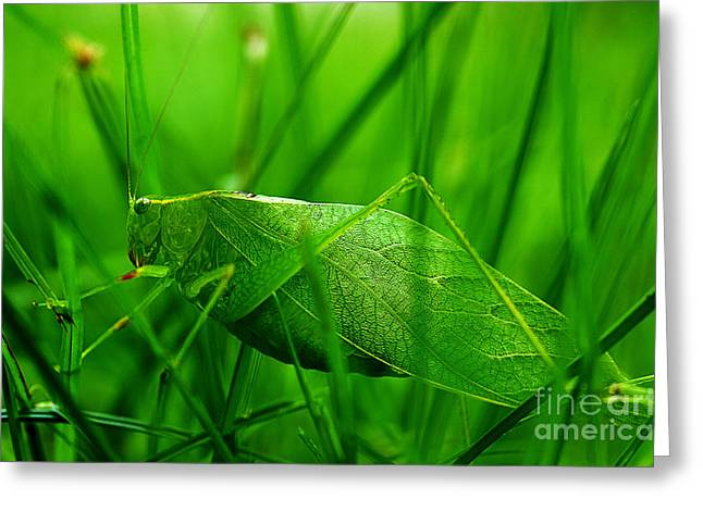 Katydid Greeting Cards - Hiding Greeting Card by Michael Eingle