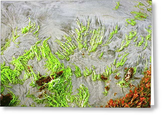 High Angle View Of A Colorful World Greeting Card by Panoramic Images