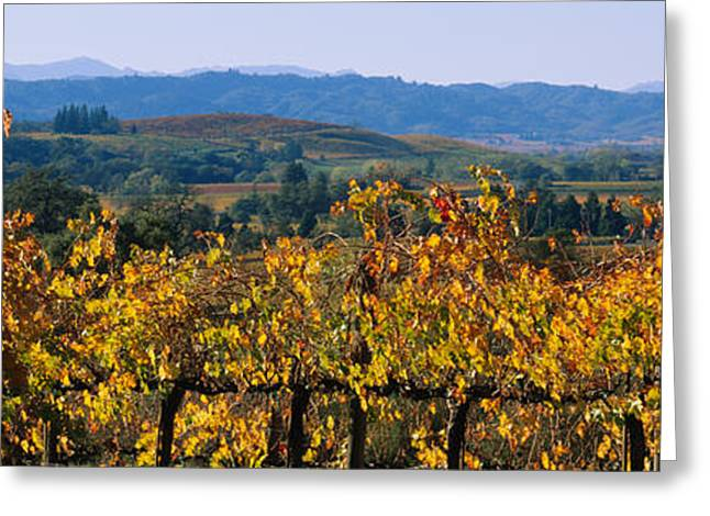 Alexander Valley Greeting Cards - High Angle View Of A Field, Alexander Greeting Card by Panoramic Images