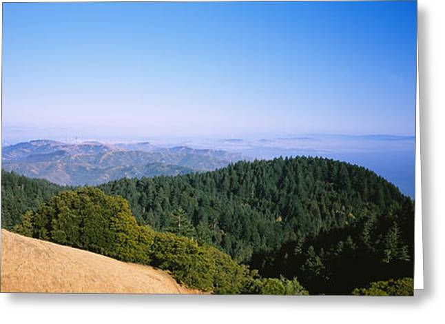 Marin County Greeting Cards - High Angle View Of A Forest, Mt Greeting Card by Panoramic Images