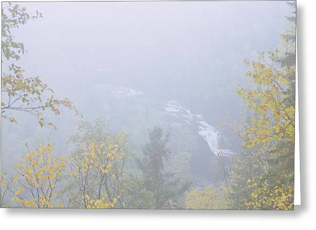 Misty Pine Photography Greeting Cards - High Angle View Of A River In A Forest Greeting Card by Panoramic Images
