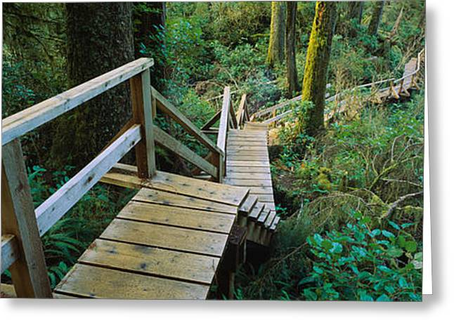 British Columbia Greeting Cards - High Angle View Of An Elevated Wooden Greeting Card by Panoramic Images