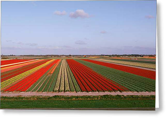 Cultivation Greeting Cards - High Angle View Of Cultivated Flowers Greeting Card by Panoramic Images