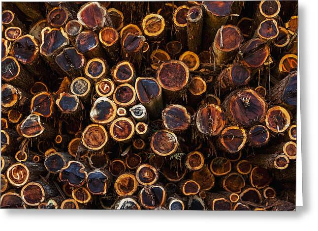 Logging Images Greeting Cards - High Angle View Of Cut Tree Trunks Greeting Card by Mike Raabe