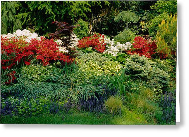 Garden Scene Photographs Greeting Cards - High Angle View Of Flowers In A Garden Greeting Card by Panoramic Images