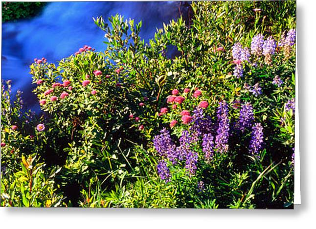 Spirea Greeting Cards - High Angle View Of Lupine And Spirea Greeting Card by Panoramic Images