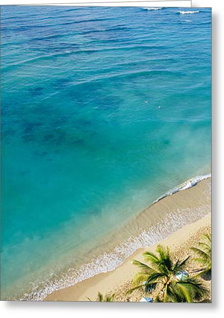Beach Photography Greeting Cards - High Angle View Of Palm Trees Greeting Card by Panoramic Images