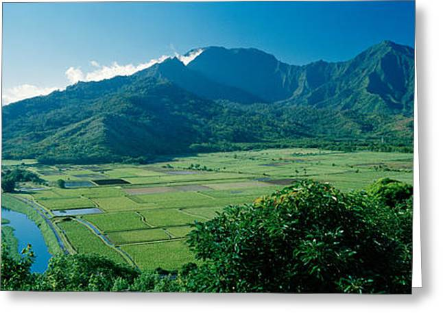 High Angle View Of Taro Fields, Hanalei Greeting Card by Panoramic Images