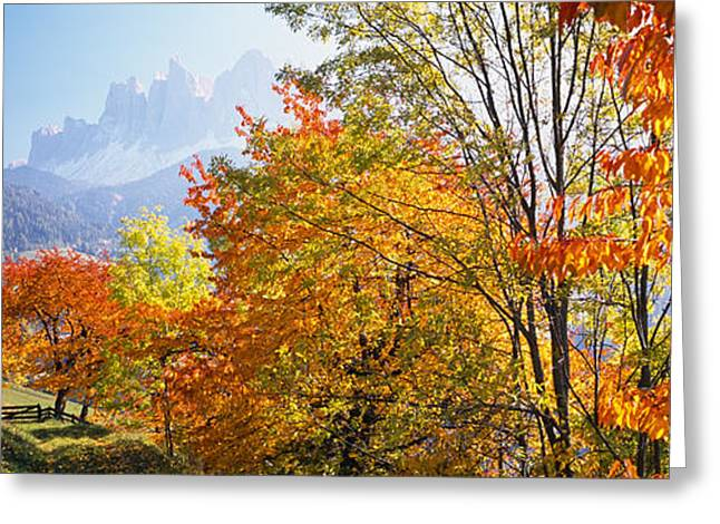 Mountain Greeting Cards - High Angle View Of Trees In A Forest Greeting Card by Panoramic Images