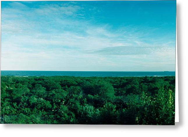 York Beach Greeting Cards - High Angle View Of Trees With Atlantic Greeting Card by Panoramic Images