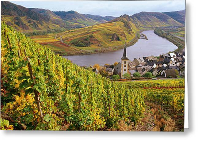 Viniculture Greeting Cards - High Angle View Of Vineyards With Town Greeting Card by Panoramic Images