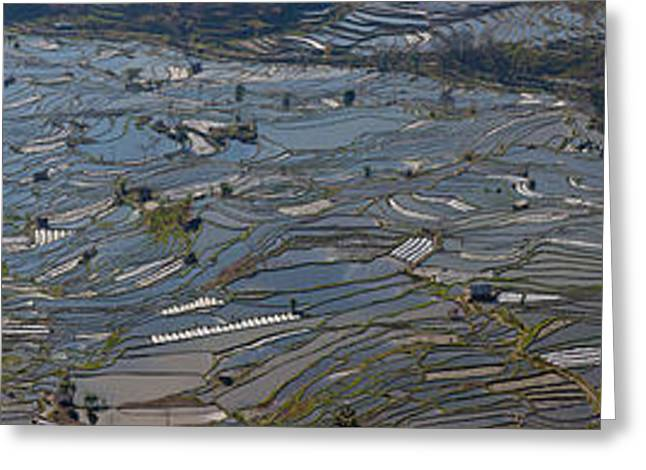 Paddy Greeting Cards - High Angle View Of Water Filled Rice Greeting Card by Panoramic Images