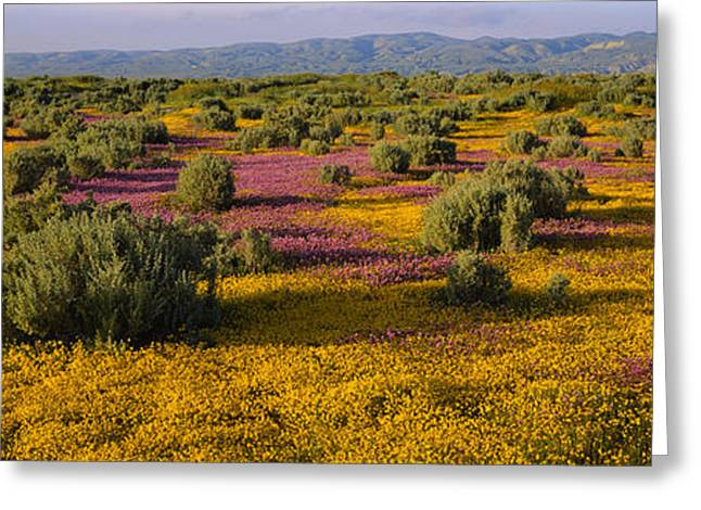 Sonoma Valley Greeting Cards - High Angle View Of Wildflowers In A Greeting Card by Panoramic Images