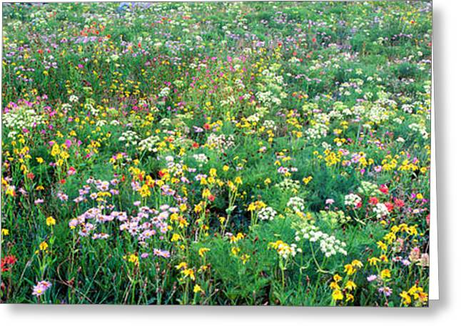 Wildflower Photography Greeting Cards - High Angle View Of Wildflowers Greeting Card by Panoramic Images