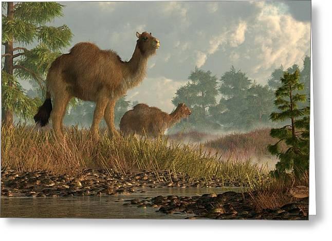 Camel Digital Greeting Cards - High Arctic Camel Greeting Card by Daniel Eskridge