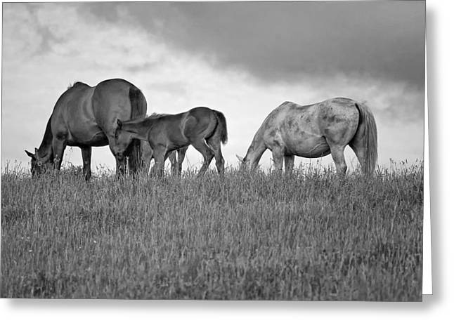 Equestrian Prints Photographs Greeting Cards - High Browsers monochrome Greeting Card by Steve Harrington