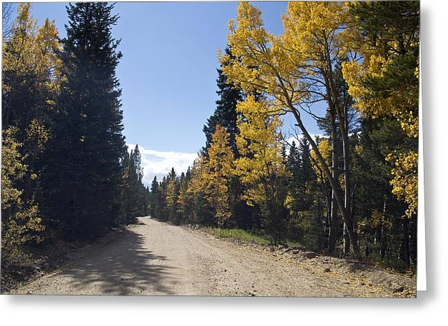 Country Dirt Roads Greeting Cards - High Country Autumn Dirt Road Greeting Card by James BO  Insogna