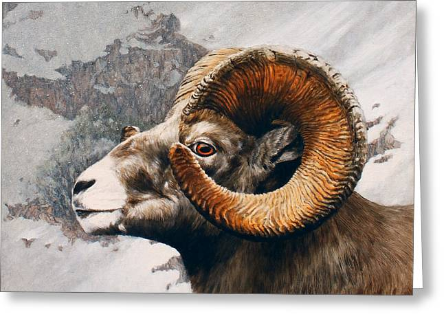 Bighorn Greeting Cards - High Country Bighorn Greeting Card by Rob Dreyer AFC