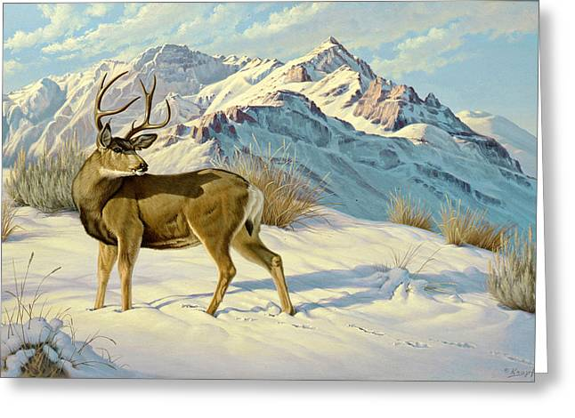 Mules Greeting Cards - High Country Buck Greeting Card by Paul Krapf