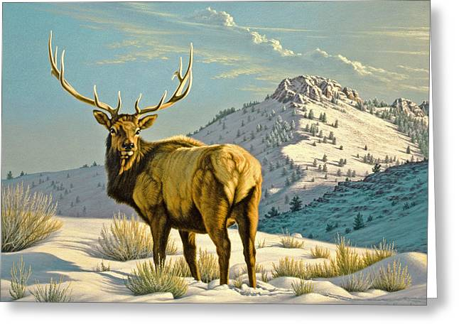 Elk Wildlife Greeting Cards - High Country Bull Greeting Card by Paul Krapf