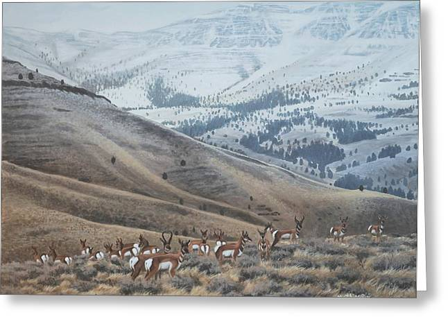Peter Mathios Greeting Cards - High Country Pronghorn Greeting Card by Peter Mathios
