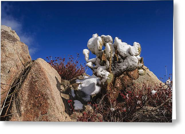High Desert Snow 2 Greeting Card by Scott Campbell