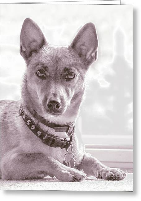 Dog Pics Greeting Cards - High Key Barney Greeting Card by Linsey Williams