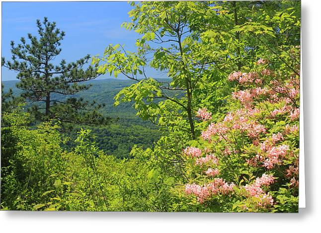 Ledge Photographs Greeting Cards - High Ledges Azelea over Deerfield River Valley Greeting Card by John Burk