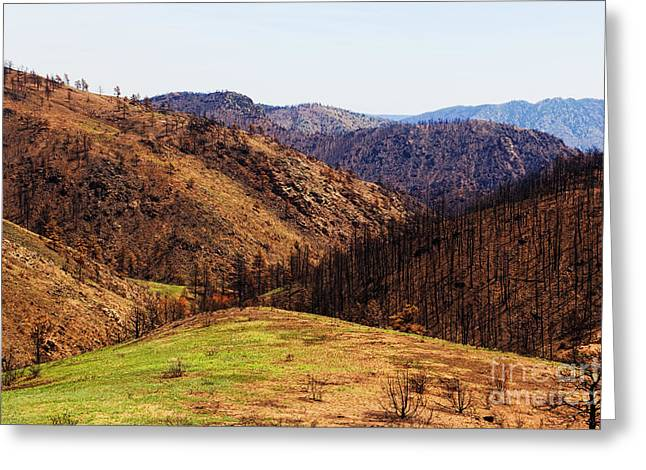 High Park Fire Greeting Cards - High Park Fire burn Greeting Card by Jon Burch Photography