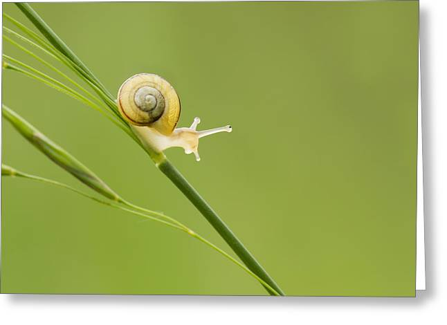 Macro Micro Greeting Cards - High Speed Snail Greeting Card by Mircea Costina Photography