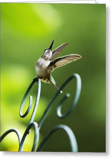 High Spirit Hummingbird Greeting Card by Christina Rollo