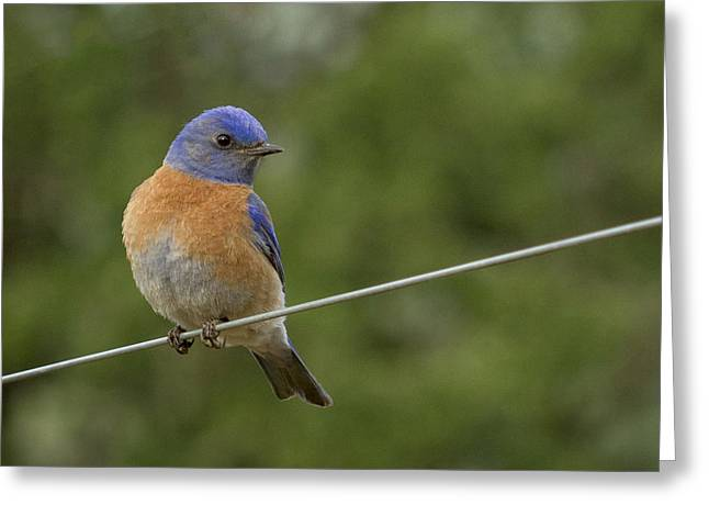 High Wire Greeting Card by Jean Noren