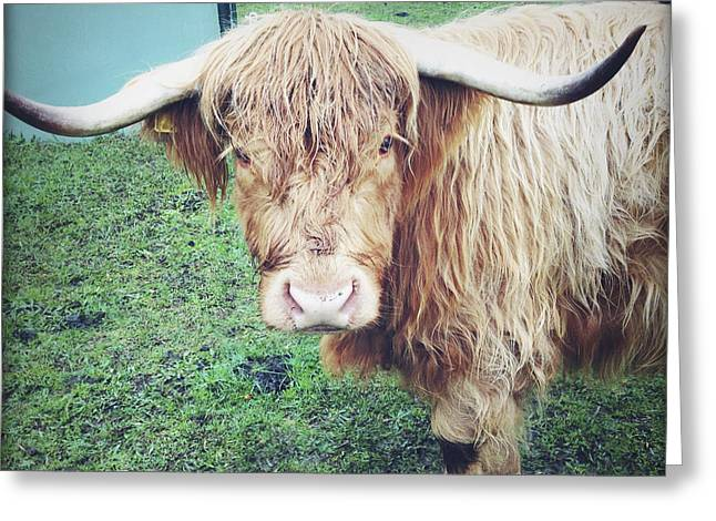 Steer Photographs Greeting Cards - Highland cow Greeting Card by Les Cunliffe