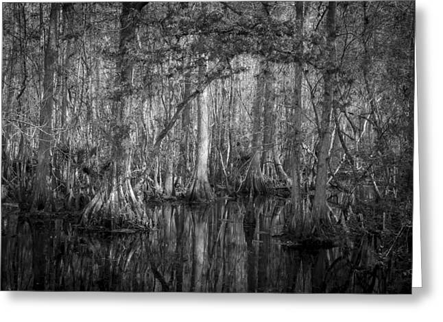 Highland Hammocks State Park Florida Bw Greeting Card by Rich Franco