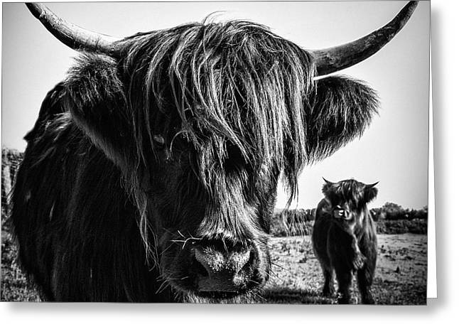 Flora And Fauna Greeting Cards - Highlander 1 Greeting Card by Janet Burdon