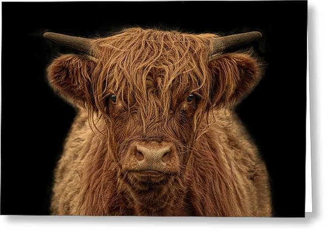 Highlander Greeting Card by Joachim G Pinkawa